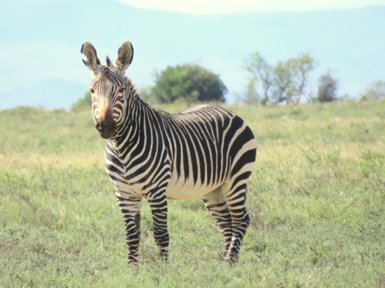 This is why it is called Mountain Zebra National Park