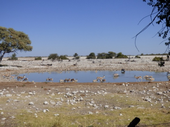 Lots to see at the waterhole